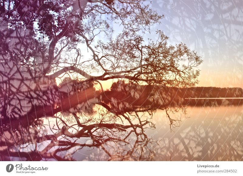colourful Art Painter Environment Nature Landscape Water Sky only Cloudless sky Sunrise Sunset Summer Beautiful weather Plant Tree Leaf Wild plant Lakeside