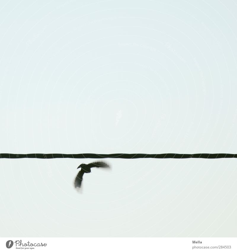 And off you go Cable Environment Animal Air Sky Bird 1 Line Movement Flying Small Nature Flee Escape Going Individual Colour photo Exterior shot Deserted