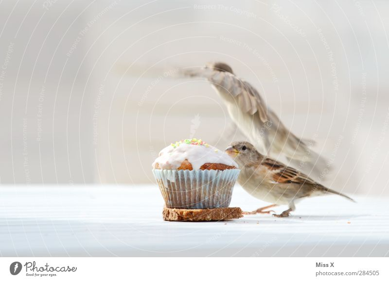 theft bit Food Dough Baked goods Cake Dessert Nutrition Breakfast To have a coffee Animal Wild animal Bird 2 Flying Delicious Curiosity Sweet Sparrow To feed