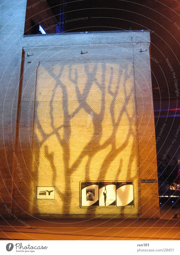 Old Tree Yellow Wall (building) Building Lighting Orange Architecture Factory hall Projection