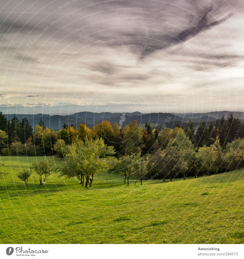 Sky Nature Green Plant Tree Leaf Clouds Landscape Black Forest Environment Meadow Mountain Autumn Grass Gray