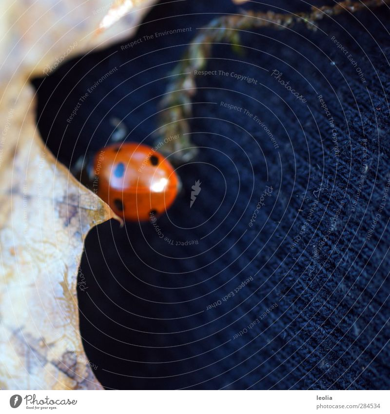 Nature Plant Red Animal Leaf Black Autumn Small Brown Natural Wild animal Beautiful weather Stripe Point Near Insect