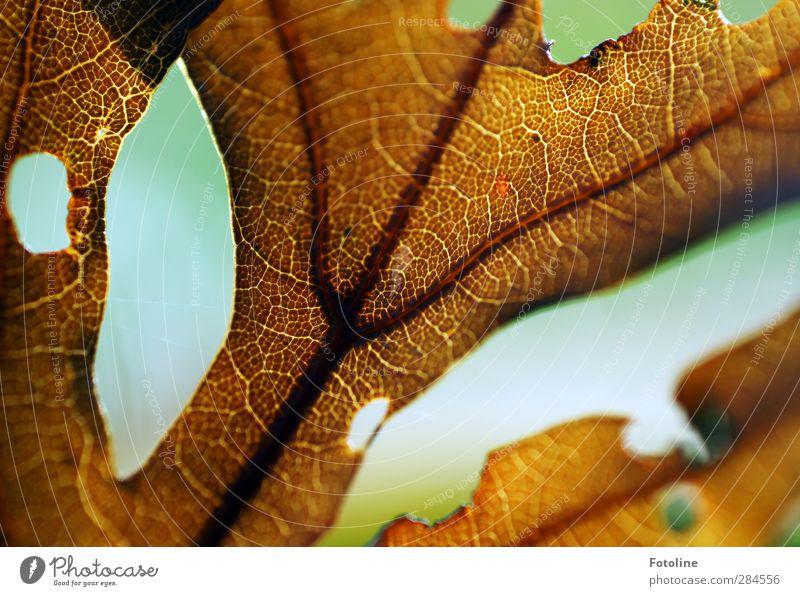 Here we go: AUTUMN Environment Nature Plant Autumn Leaf Near Natural Brown Rachis Autumnal Hollow Colour photo Multicoloured Exterior shot Close-up Detail