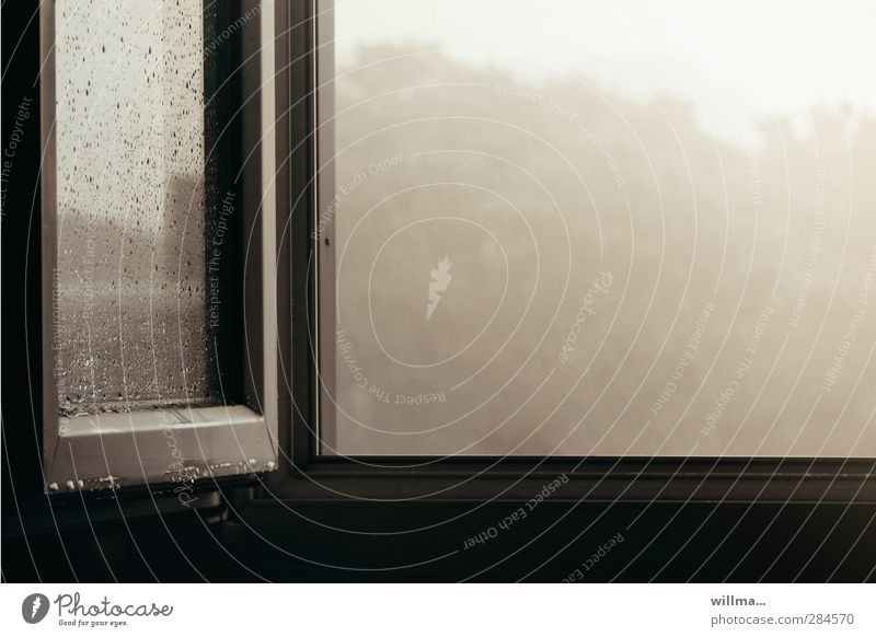 Rain tristesse at the open window Window Cold Gloomy Gray Boredom Sadness Distress Frustration Moody Open View from a window Window pane Ventilate October