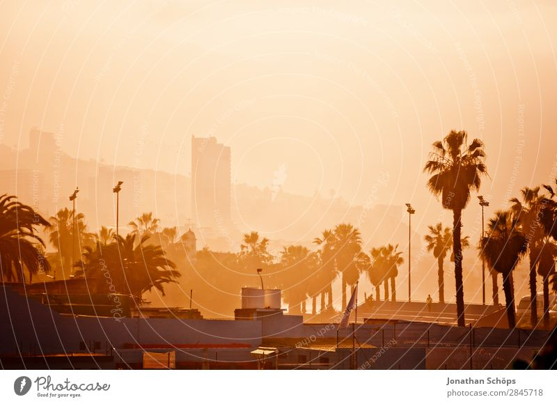 City view Puerto de la Cruz, Tenerife Palm tree High-rise House (Residential Structure) Canaries Spain South Town Port City Downtown Smog Fog Warmth Sun Hot Dry