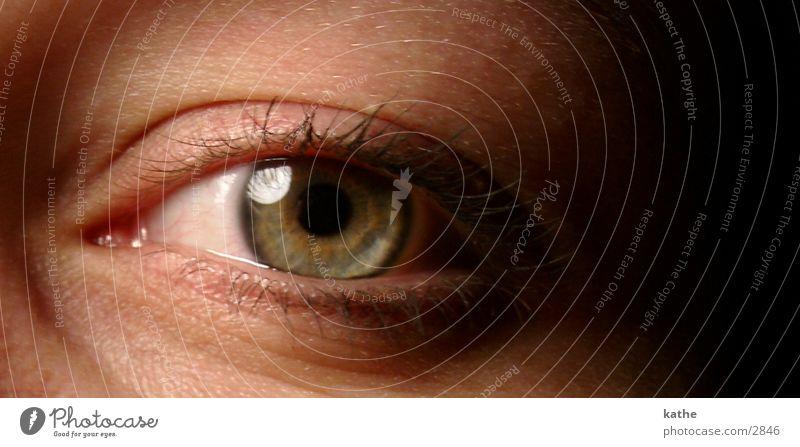 eye 01 Pupil Human being Eyes Looking Perspective Iris