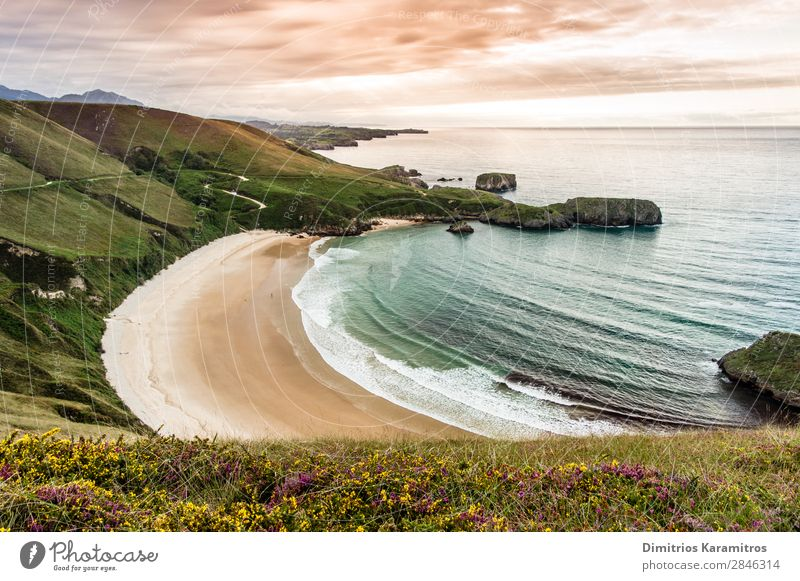 Torimbia beach in Spain Environment Nature Landscape Sand Water Sky Clouds Summer Beautiful weather Flower Waves Coast Beach To enjoy Vacation & Travel Exotic
