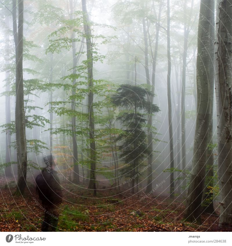 forest spirit Trip Human being Masculine 1 Environment Nature Autumn Climate Climate change Fog Deciduous forest Forest Dark Cold Emotions Moody Past Future