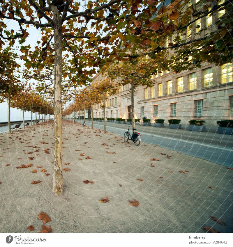 Nature City Plant Tree Landscape House (Residential Structure) Street Autumn Movement Lanes & trails Architecture Building Art Weather Bicycle Transport
