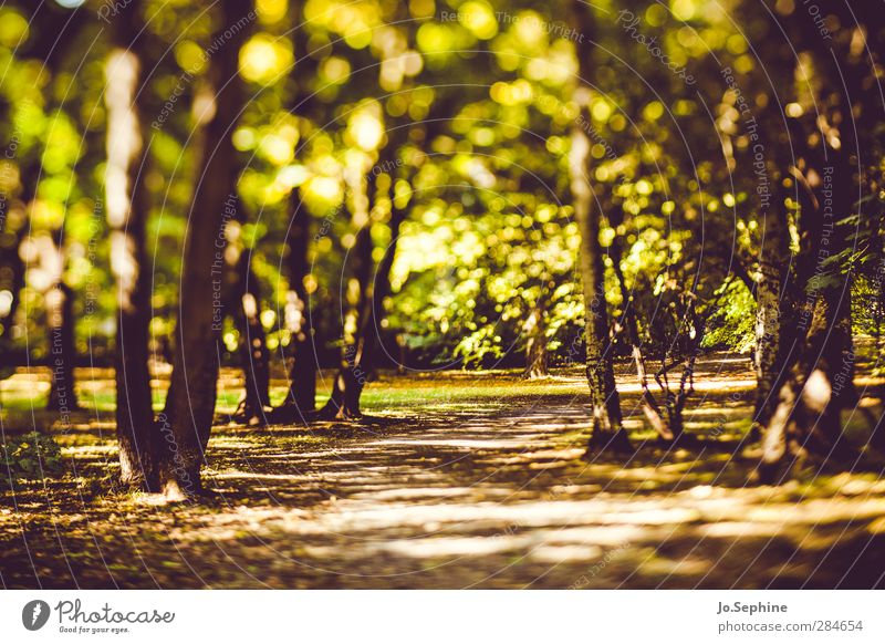 Nature Green Plant Tree Relaxation Forest Environment Autumn Lanes & trails Park Beautiful weather Promenade Green space