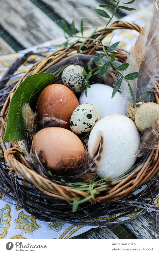 Easter is not far away... Nature Egg Feasts & Celebrations Seasons Barn fowl Nest Brown White Green Life Healthy Eating Dish Cooking Feather Quail's egg Leaf