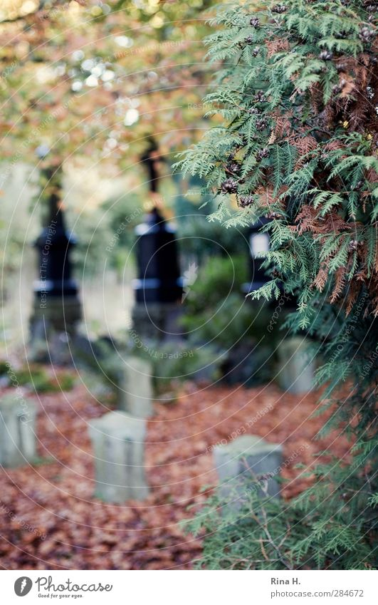 Tree Leaf Autumn Emotions Sadness Religion and faith Transience Grief Pain Cemetery Lose Tombstone To dry up