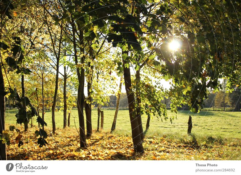 october day Nature Landscape Plant Animal Sun Sunrise Sunset Sunlight Autumn Weather Beautiful weather Tree Grass Bushes Park Meadow Field Forest Bright Brown