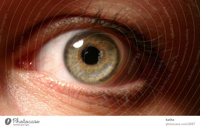 Human being Eyes Perspective Pupil Iris