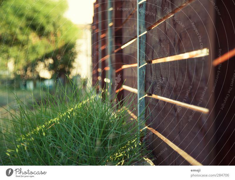 warmth Environment Nature Beautiful weather Grass Garden Meadow Natural Colour photo Exterior shot Close-up Detail Deserted Day Light Shadow Sunlight Sunbeam