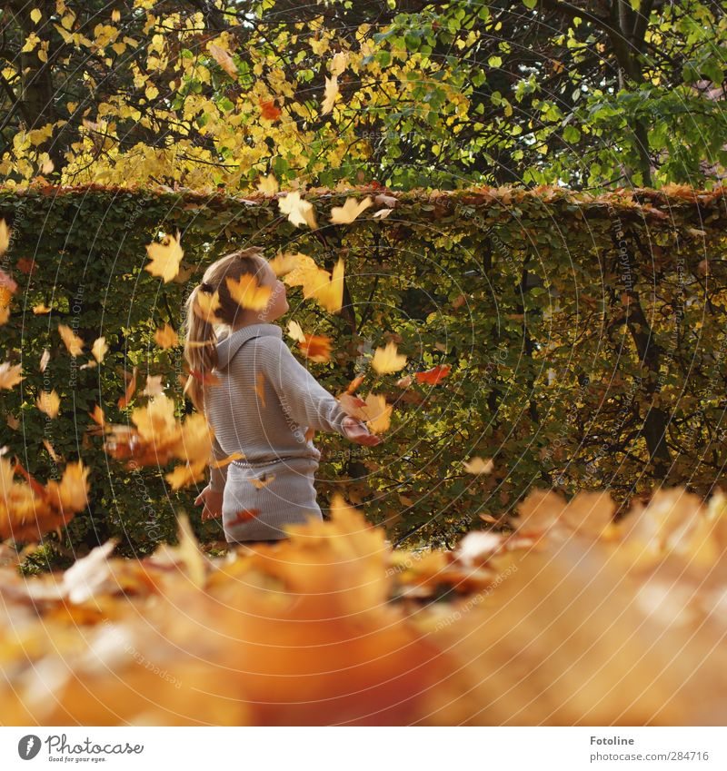 Human being Child Nature Plant Girl Joy Leaf Environment Warmth Autumn Feminine Playing Hair and hairstyles Head Bright Park