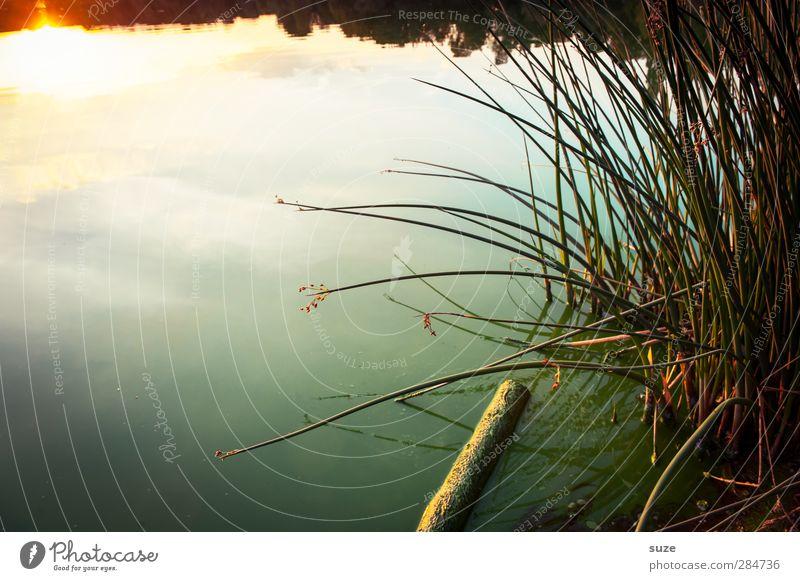 Nature Water Green Beautiful Summer Loneliness Calm Landscape Environment Dark Meadow Grass Lake Horizon Moody Natural