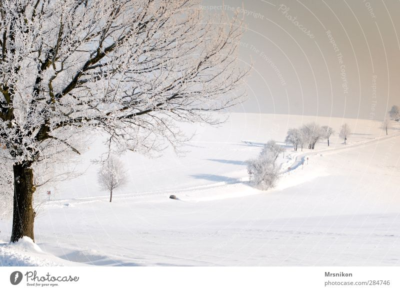 winter magic Leisure and hobbies Hiking Nature Landscape Sunrise Sunset Winter Beautiful weather Ice Frost Snow Tree Field Village Outskirts Deserted Street