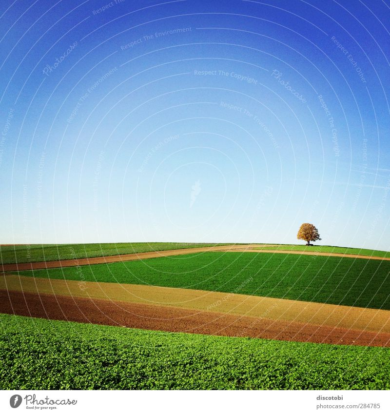 's Ländle Nature Landscape Earth Sky Horizon Beautiful weather Tree Field Blue Brown Yellow Gold Green Orange Swabia Ditzingen Baden-Wuerttemberg Agriculture
