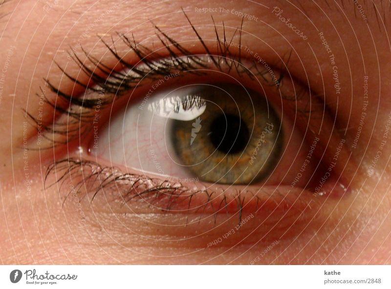 Human being Face Eyes Perspective Eyelash Pupil Iris