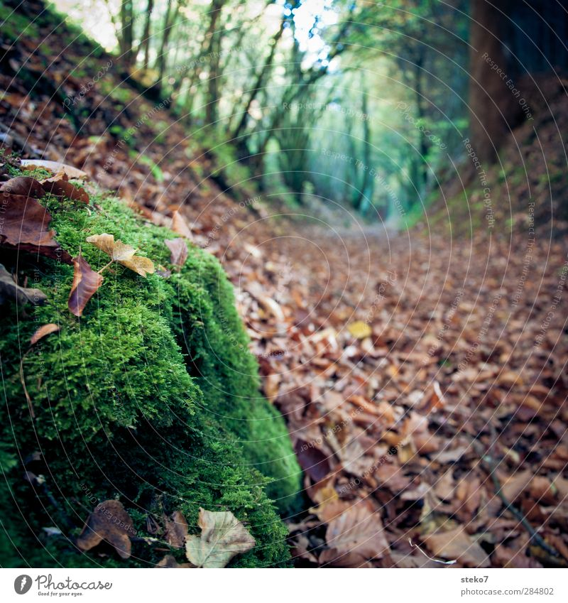 path marking Nature Autumn Leaf Forest Brown Green Transience Change Lanes & trails Footpath Moss Colour photo Exterior shot Close-up Deserted Isolated Image