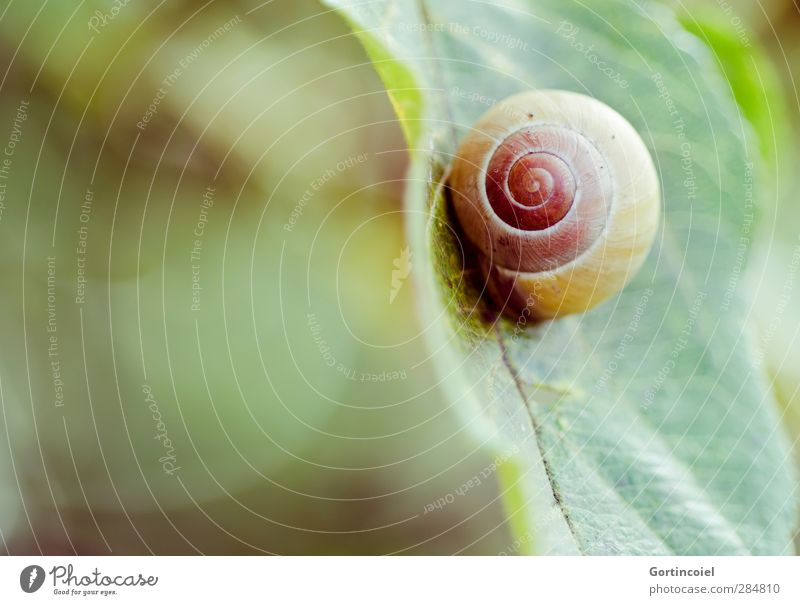Nature Plant Animal Leaf Environment Autumn Round Snail Spiral Snail shell