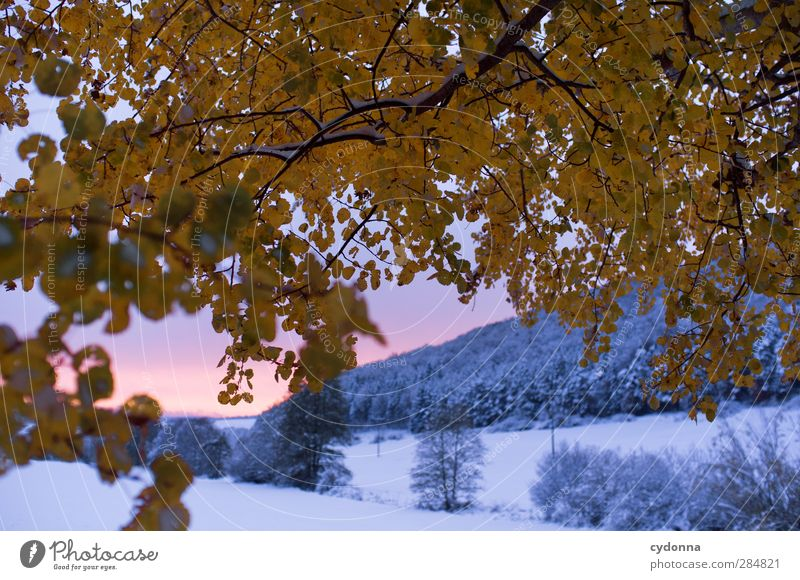 onset of winter Environment Nature Landscape Sunrise Sunset Autumn Winter Weather Ice Frost Snow Tree Leaf Esthetic Uniqueness Experience Freedom Idyll Cold
