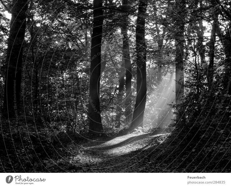 Plant Tree Calm Landscape Forest Autumn Lanes & trails Park Hiking Trip Bushes Beautiful weather Hope Romance Agriculture Hill