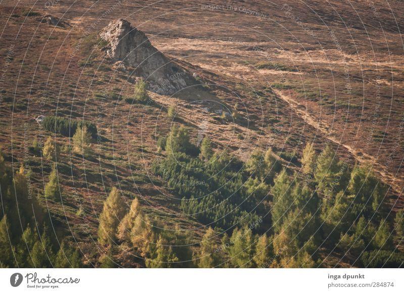 timber line Environment Nature Landscape Plant Autumn Beautiful weather Rock Mountain Carpathians Siebenbürgen Romania Adventure Environmental protection