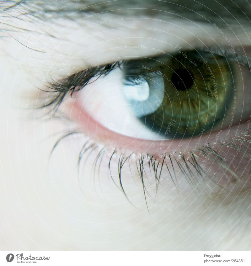 deep Human being Masculine Eyes Dream Green Eyelash Multicoloured Macro (Extreme close-up) Looking into the camera