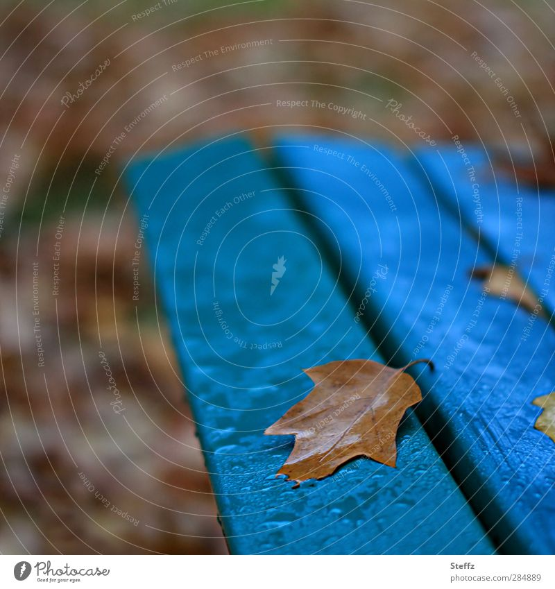 November blue Nature Autumn Bad weather Rain Leaf Autumn leaves Park Automn wood Wet Blue Brown Calm November mood End Past Transience Change Bench Autumnal