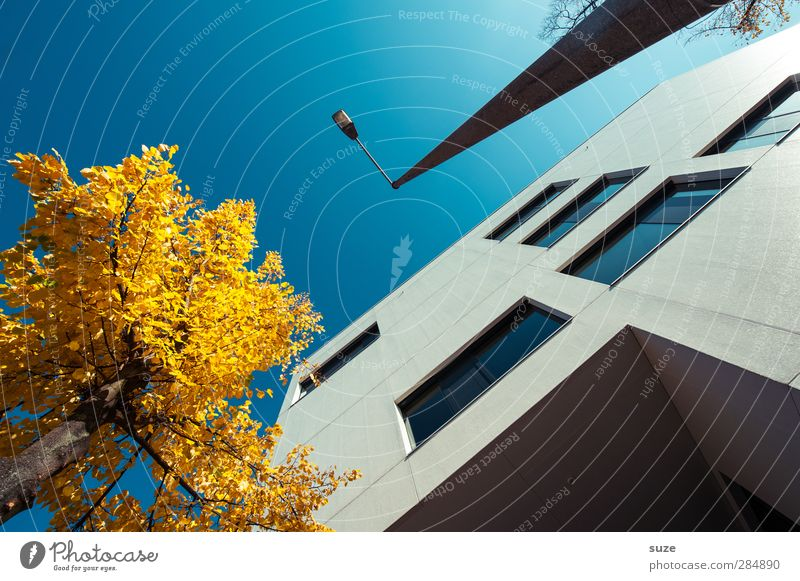 city contrasts Work and employment Business Environment Sky Cloudless sky Autumn Beautiful weather Tree Town House (Residential Structure) Manmade structures