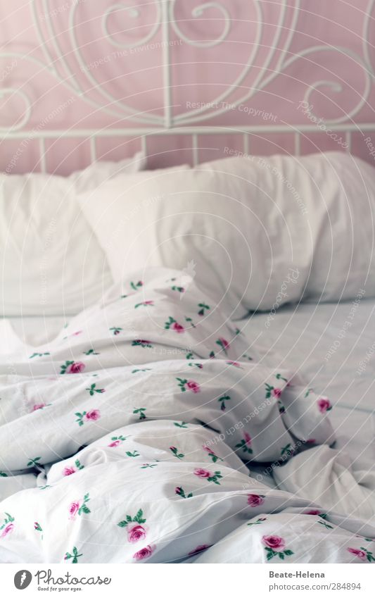 Rosige nights Lifestyle Elegant Wellness Vacation & Travel Living or residing Rose Dream house Relaxation Crawl Smiling Love Lie Sleep Esthetic Warmth Pink Red