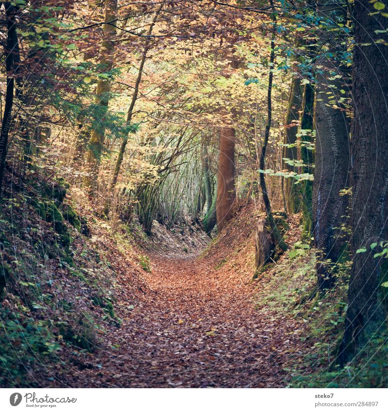 leaf tube Autumn Leaf Forest Hiking Brown Green Transience Change Lanes & trails Footpath Mystic Enchanted forest Colour photo Exterior shot Deserted