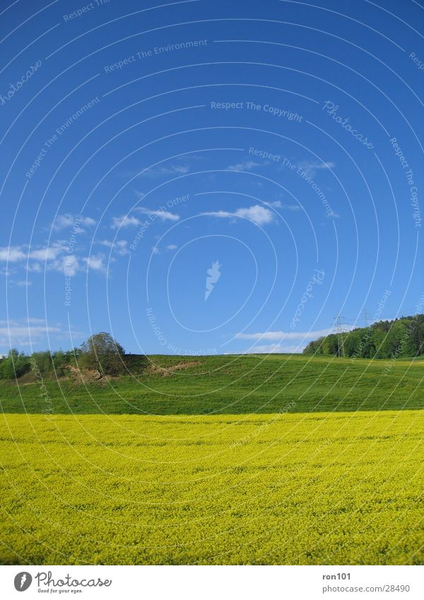 Sky Tree Green Blue Clouds Yellow Meadow Hill Canola Canola field