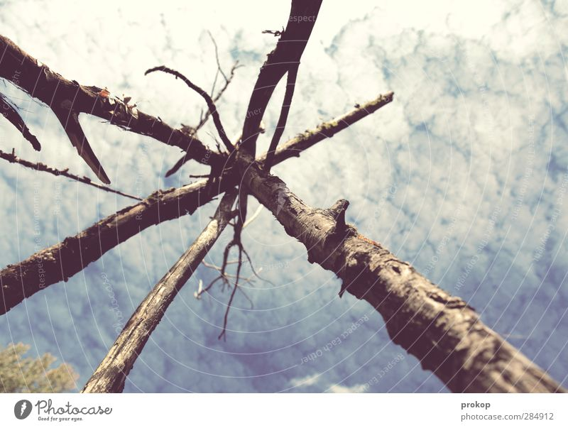 Spiritual protective bunker Environment Nature Air Sky Clouds Beautiful weather Plant Tree Joie de vivre (Vitality) Tee Pee Framework Spirituality Tree trunk