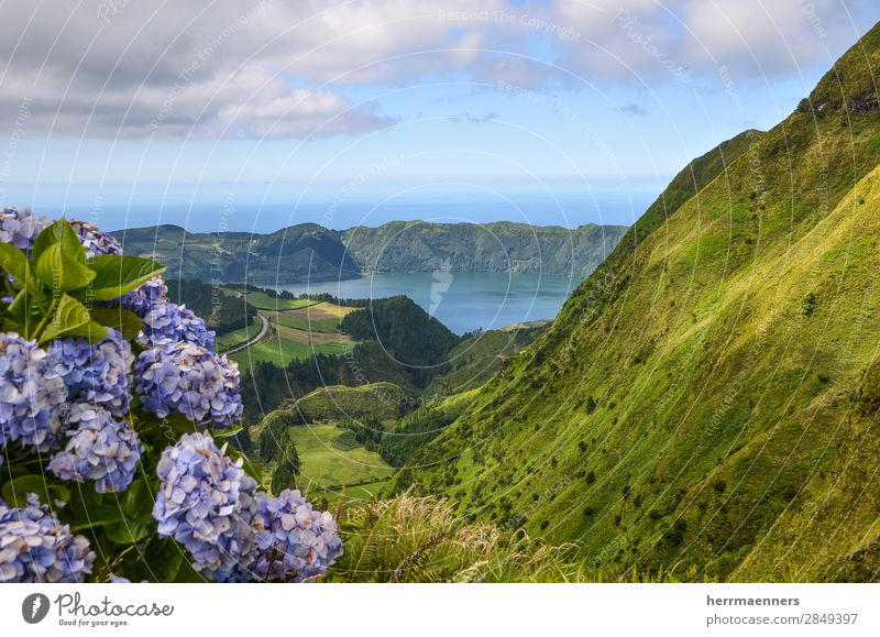 Azores 01 Nature Landscape Plant Sky Clouds Summer Beautiful weather Flower Bushes Leaf Blossom Hydrangea Hill Mountain Volcano Volcanic crater Lakeside Ocean