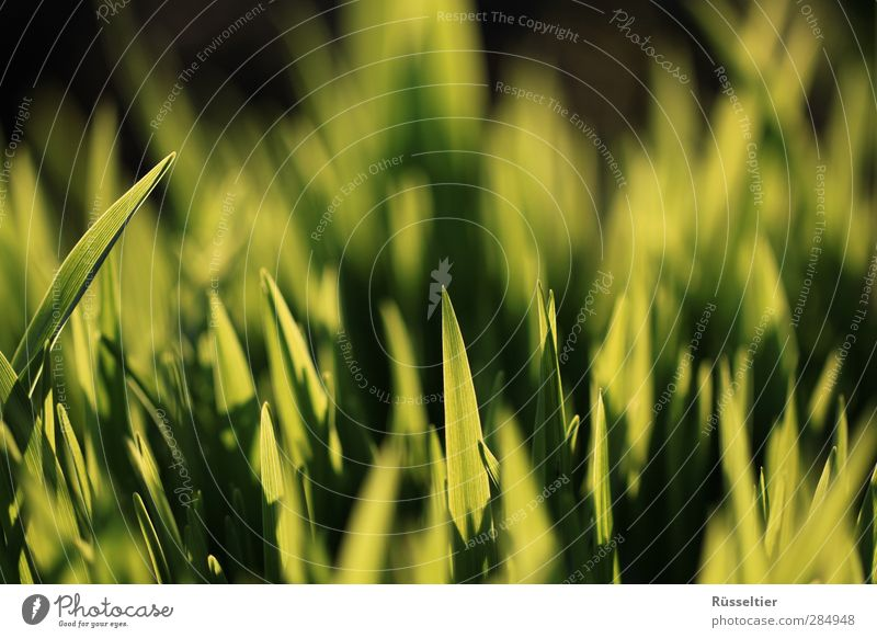 lace grass Sunlight Grass Growth Green Contrast Macro (Extreme close-up) Colour photo Multicoloured Close-up