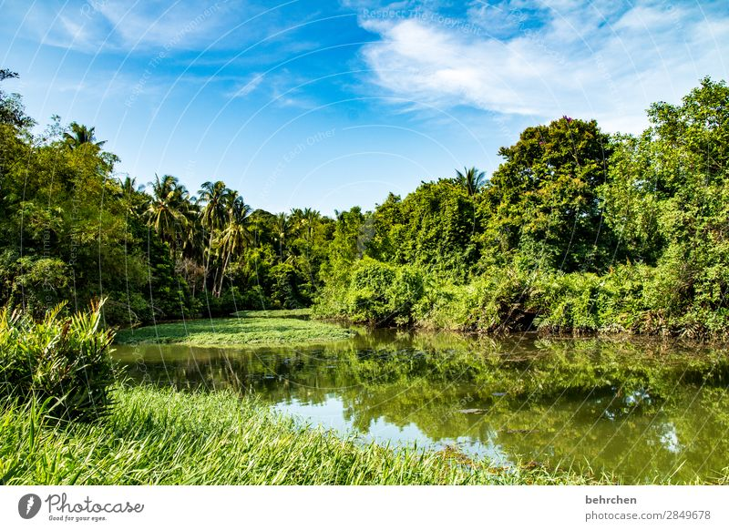 green Idyll Paradise Fantastic Asia Plant Deserted To enjoy recover Exceptional Sunlight Exotic Gorgeous palms River bank reflection Climate change Sky Clouds