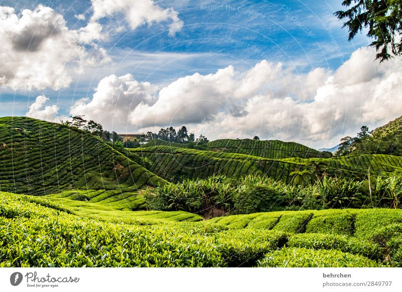Outside only jugs Vacation & Travel Tourism Trip Adventure Far-off places Freedom Nature Landscape Sky Clouds Plant Tree Bushes Leaf Agricultural crop
