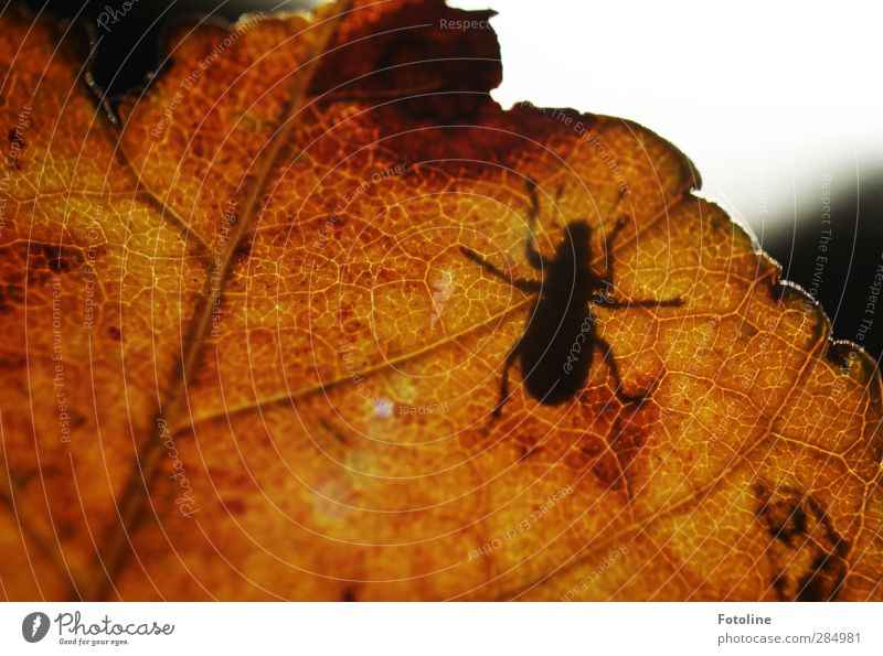 autumn shadow Environment Nature Plant Animal Autumn Leaf Beetle Near Natural Brown Black Autumn leaves Autumnal Crawl Colour photo Multicoloured Exterior shot
