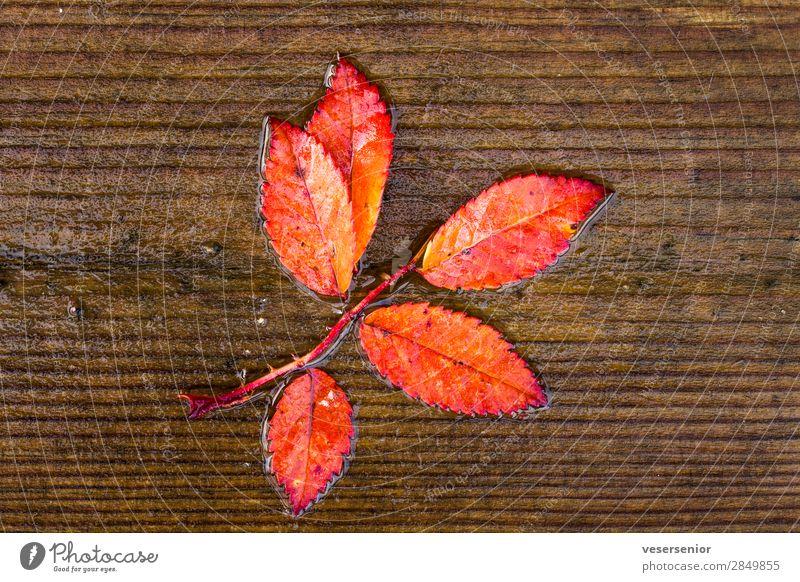 autumn love Plant Rain Rowan tree leaf Glittering Wet Beautiful Red Emotions Love Romance Belief Humble Senior citizen Esthetic Uniqueness End Colour