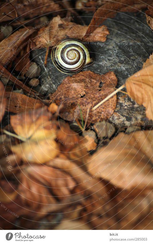 My house, my garden, my confirmation... Environment Nature Earth Autumn Garden Park Meadow Crumpet Lie Sleep To dry up Dark Round Dry Under Brown Transience
