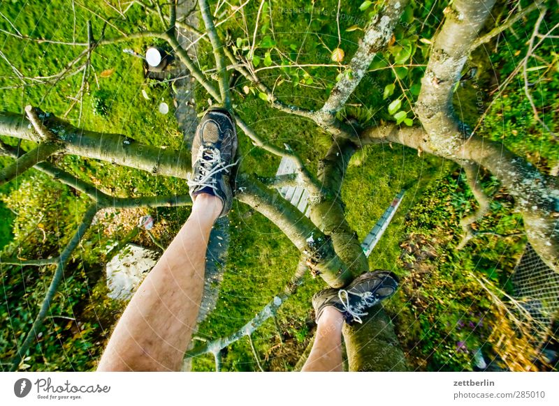 Cherry tree with shoes Sun Garden Gardening Legs Feet 1 Human being Nature Plant Autumn Tree Grass Foliage plant Agricultural crop Park Meadow Sports Joy Power