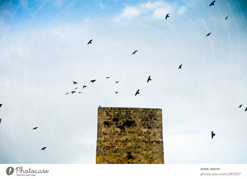 Sky Vacation & Travel Blue White Black Architecture Flying Brown Bird Above Horizon Tourism Tall Tower Historic Castle