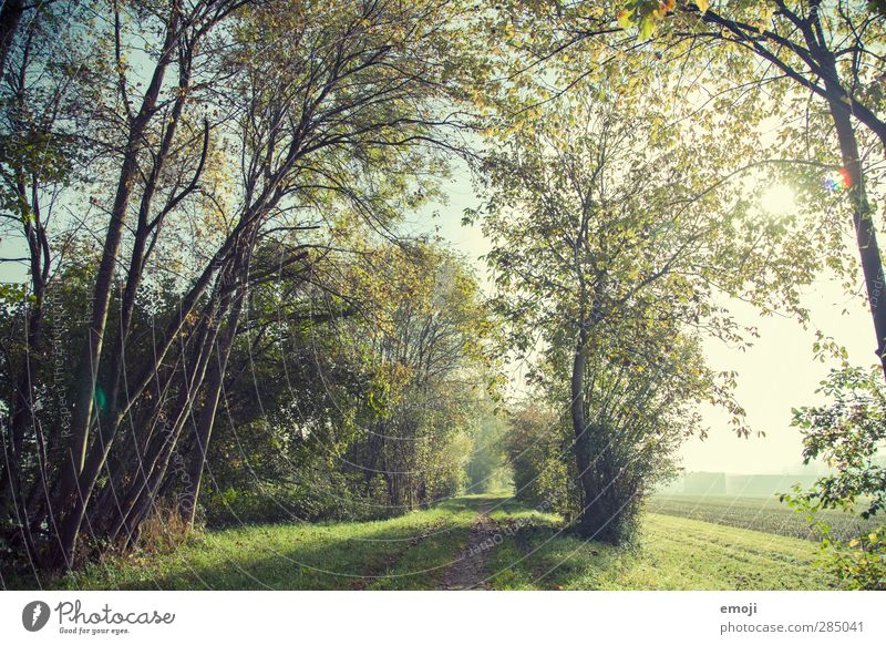 Nature Green Plant Tree Landscape Forest Environment Natural Beautiful weather