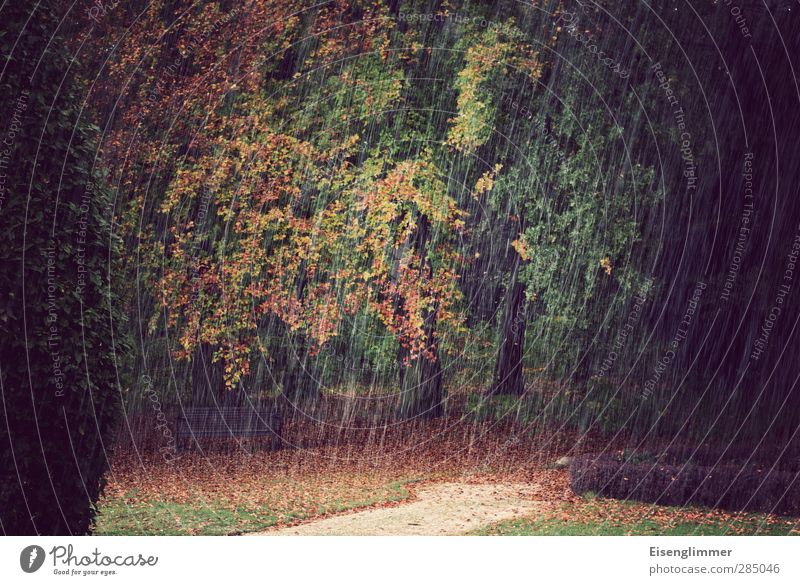 [wpt HH 10.12] Autumn shower Tree Leaf Conifer Park Meadow Idyll Environment Deciduous tree Lanes & trails Bench Rainwater Hail Autumn leaves Autumnal