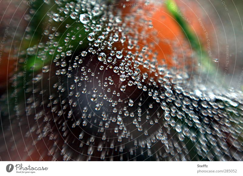 Greetings from the spider's web Nature Weather Rain Spider's web Drops of water Forest Wet Round Many Ease Network Reticular Connectedness Connection Delicate