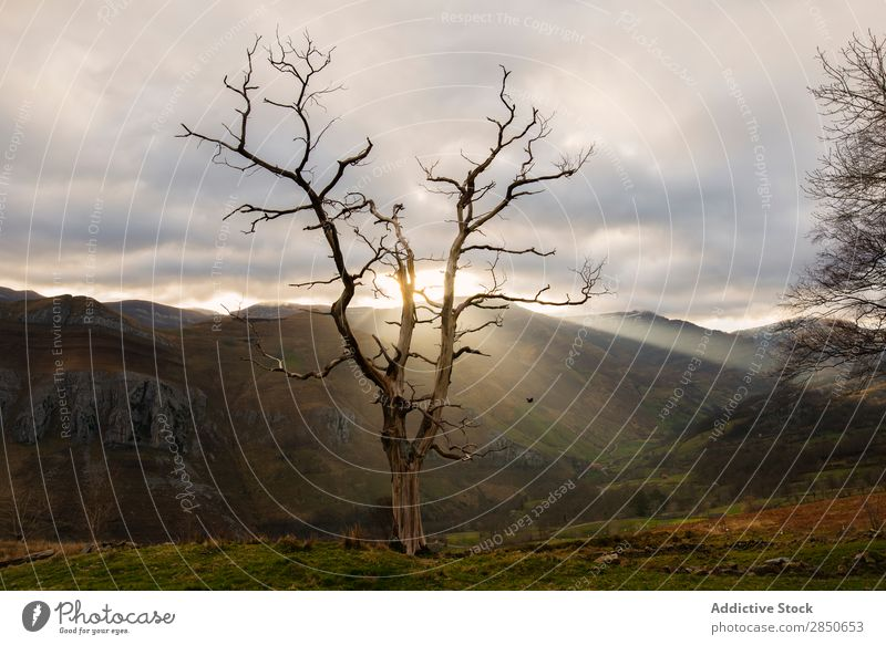 Sun shinning through leafless tree Landscape Tree Bare Nature tranquil Natural Rural Mountain Autumnal Colour Scene Moody Leafless Morning Sunlight