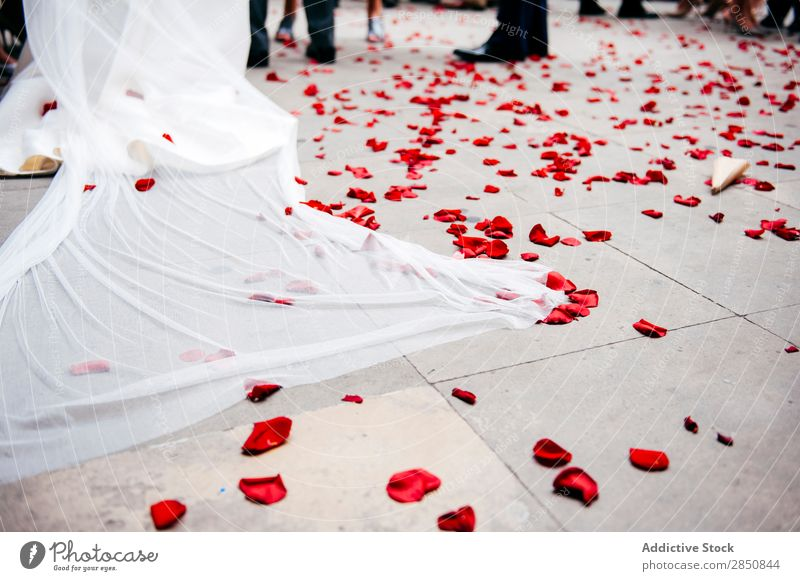 Rose petals on floor Blossom leave Wedding Story Feasts & Celebrations Ceremony Decoration Event Floral Romance Beautiful Design Plant Red Fresh Flower bridal